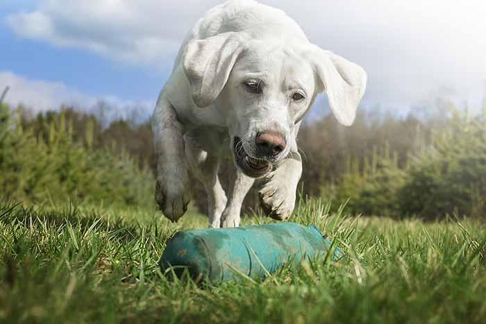 Träning inför doftprov är bra både för dig och din hund.